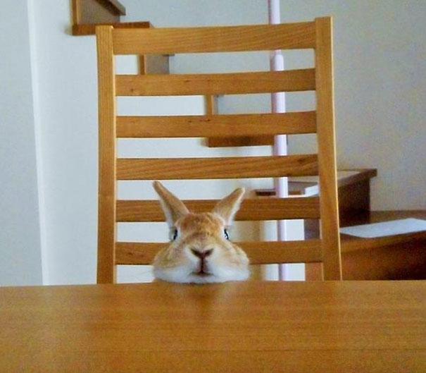 short-people-problems-bunny-koron-japan-5