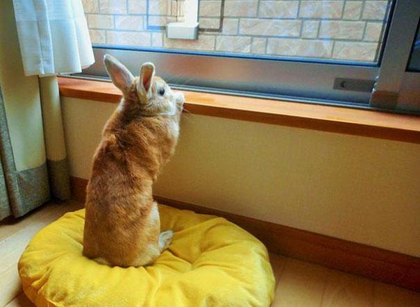short-people-problems-bunny-koron-japan-9