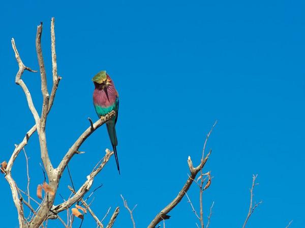színes állatok11