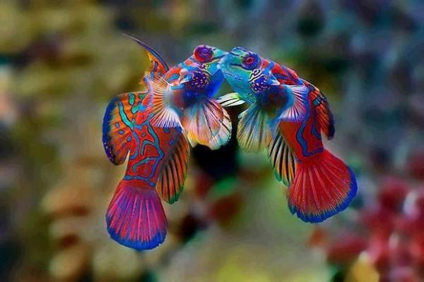 színes állatok15