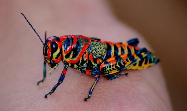 színes állatok6
