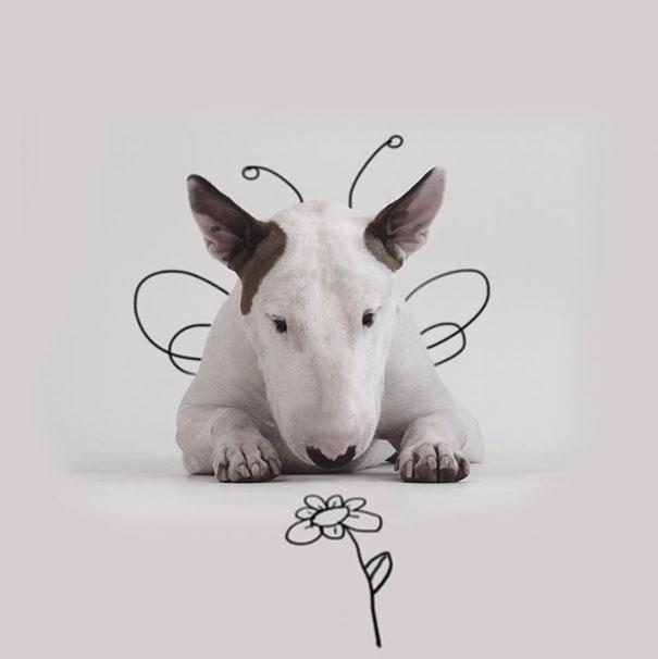 Jimmy-the-Bull-Terrier17__605