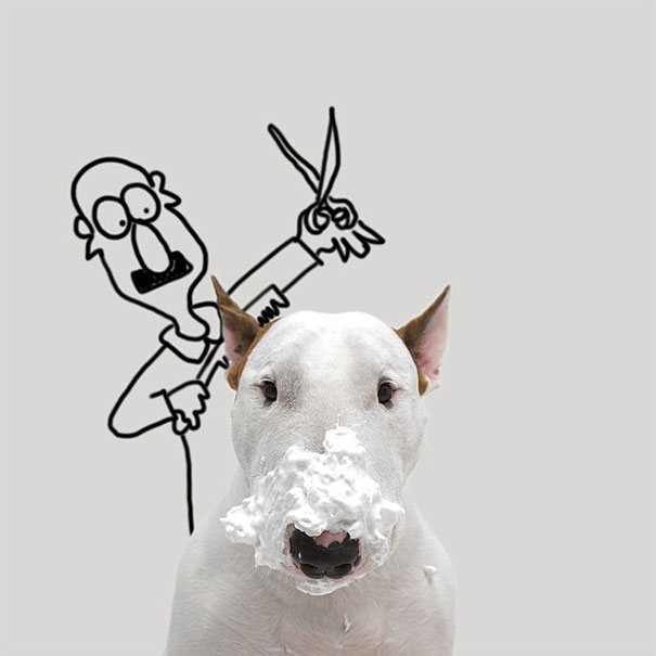 Jimmy-the-Bull-Terrier6__605