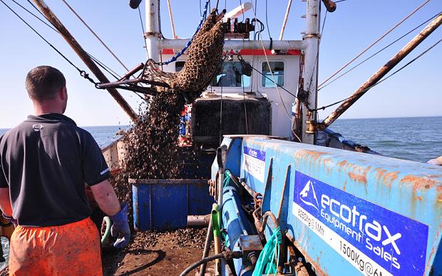 Mussels-fishing_3362124b