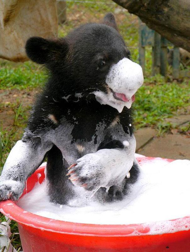 XX-animals-that-enjoys-taking-a-bath-1__605