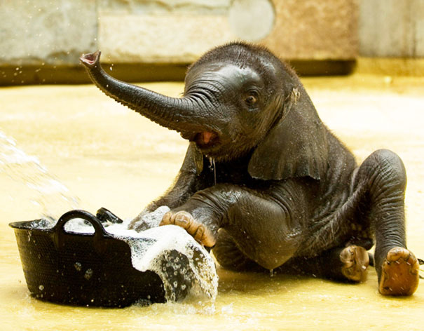 XX-animals-that-enjoys-taking-a-bath-3__605
