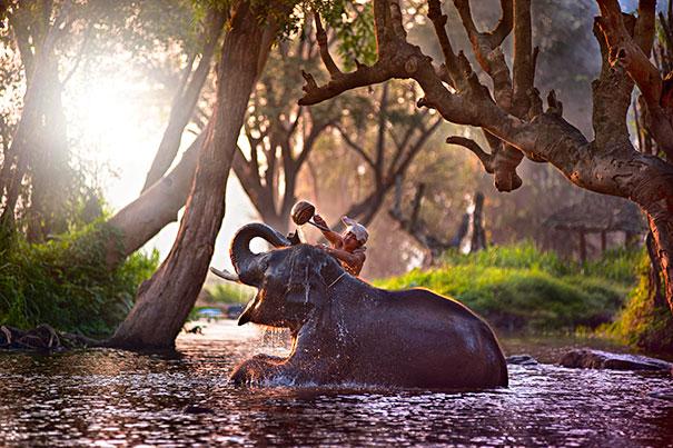 animals-taking-bath-13__605