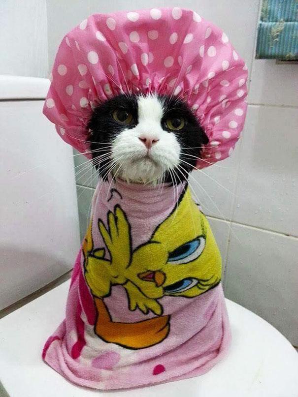 animals-taking-bath-32__605
