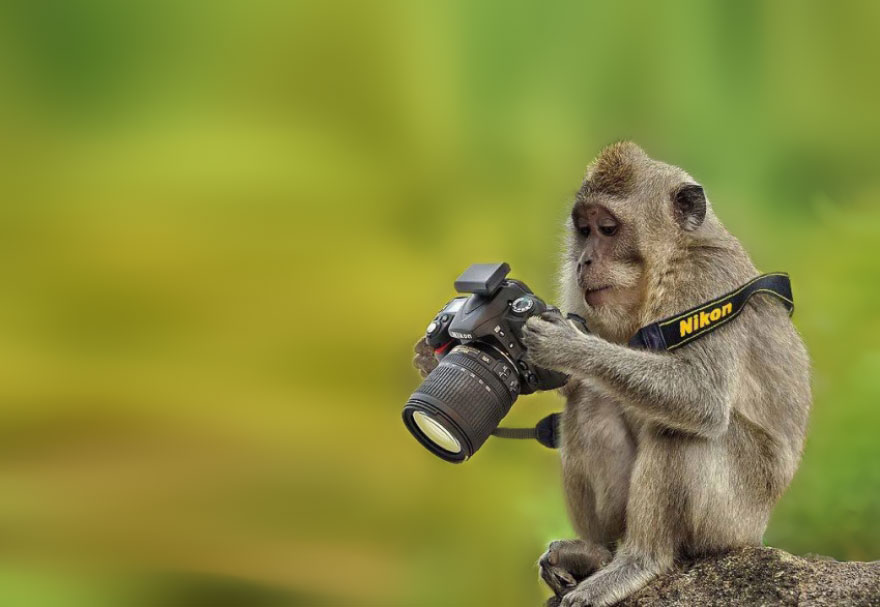 animals-with-camera-helping-photographers-18__880