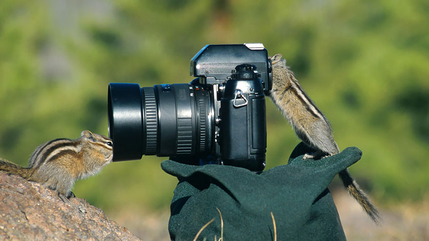 animals-with-camera-helping-photographers-22__880