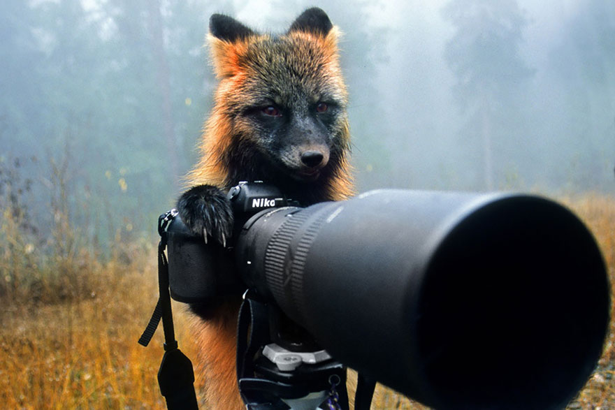 animals-with-camera-helping-photographers-26__880