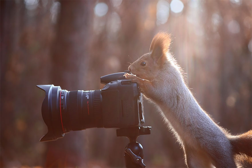 animals-with-camera-helping-photographers-27__880