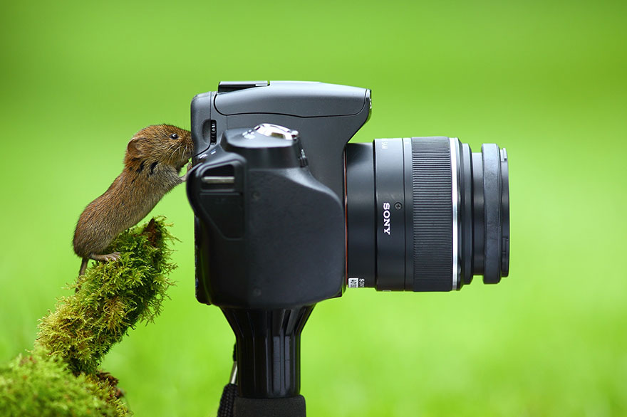 animals-with-camera-helping-photographers-3__880