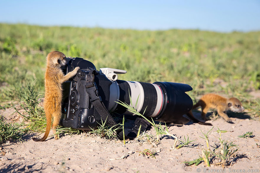 animals-with-camera-helping-photographers-4__880