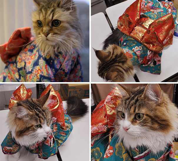 cat-kimonos-japan-14__605
