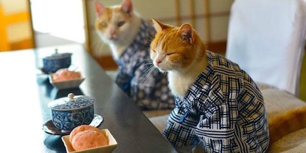 cat-kimonos-japan-19__605