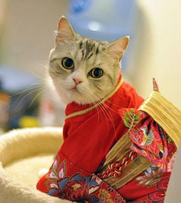cat-kimonos-japan-20__605
