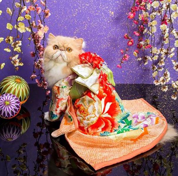 cat-kimonos-japan-24__605