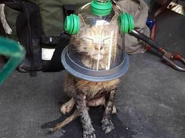 cat-revived-oxygen-mask-fire-department-1