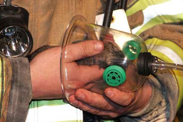 cat-revived-oxygen-mask-fire-department-2