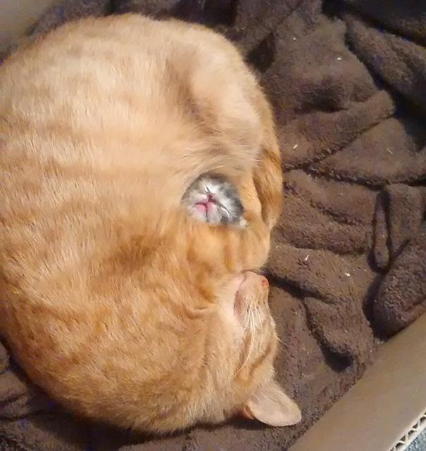 cutest-sleeping-kitties-ever-101__605