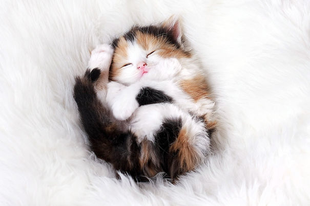 cutest-sleeping-kitties-ever-106__605
