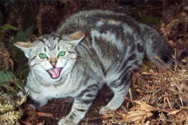elvadult-macskak-1