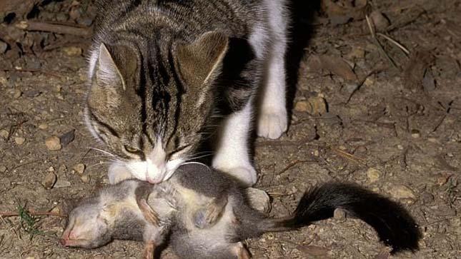 elvadult-macskak-2