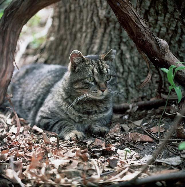 elvadult-macskak-4