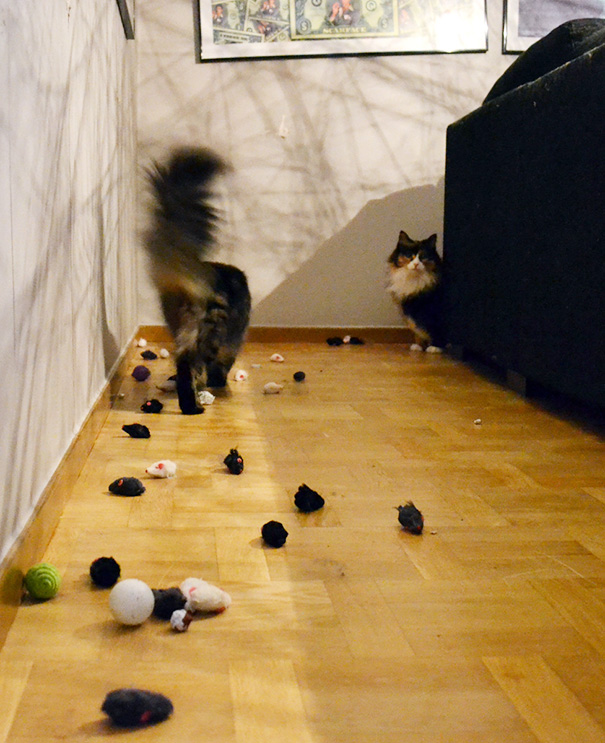hoarder-cat-14__605