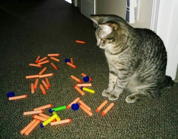 hoarder-cat-5__605