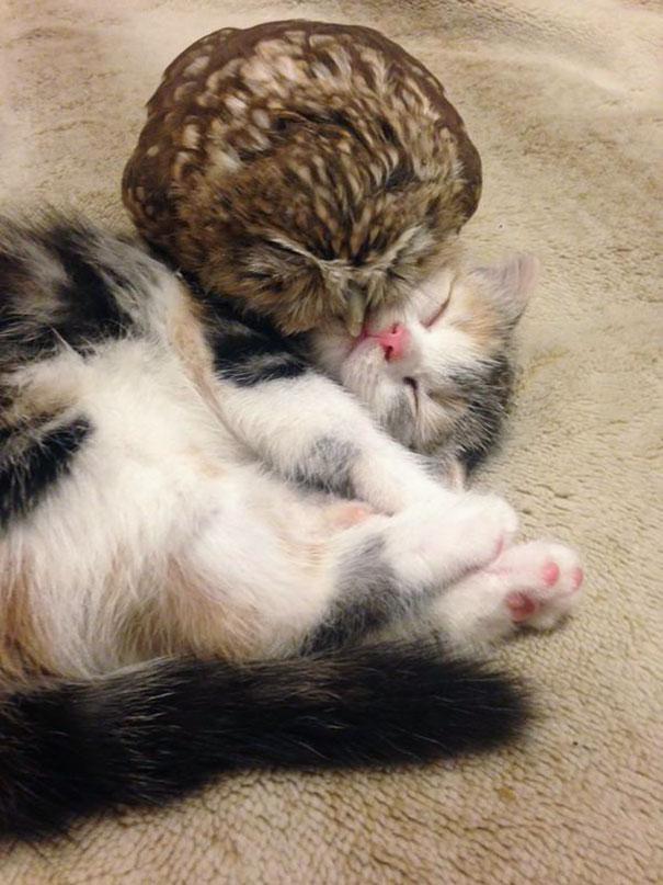kitten-owl-best-friends-fuku-marimo-hukulou-coffee-japan-22