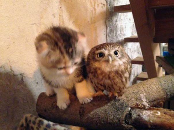 kitten-owl-best-friends-fuku-marimo-hukulou-coffee-japan-32