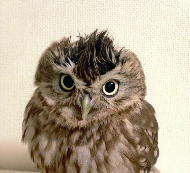 kitten-owl-best-friends-fuku-marimo-hukulou-coffee-japan-72