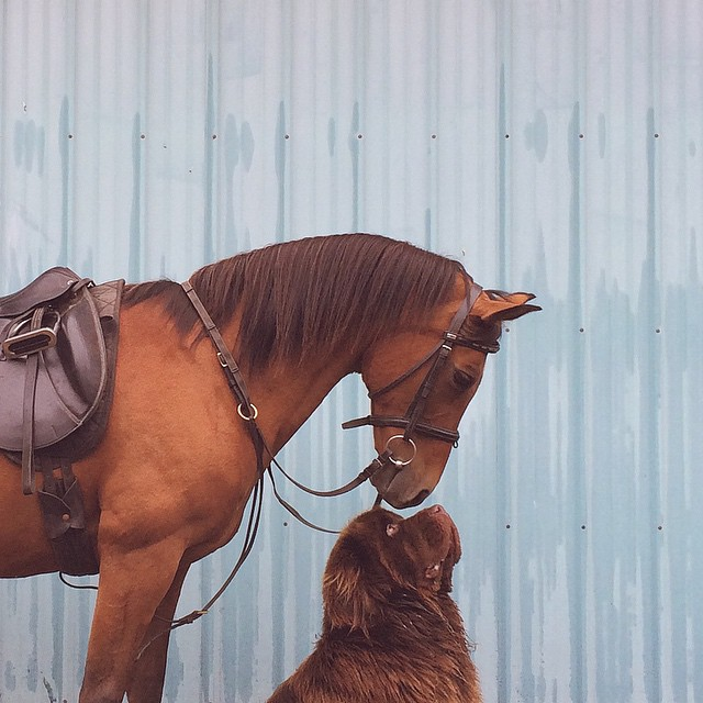 mom-photographs-son-dogs-horse-friendship-stasha-becker-julian-61
