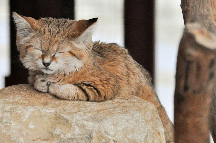 sand-cats-kittens-forever-12