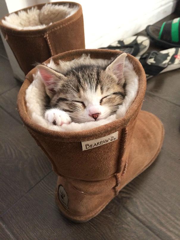 sleeping-kitties-18__605