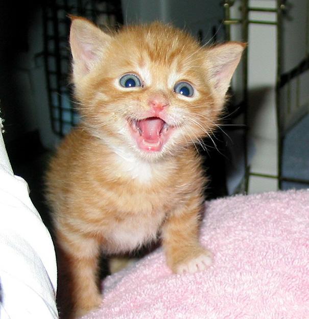 smiling-cat-19__605