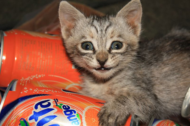 smiling-cat-24__605