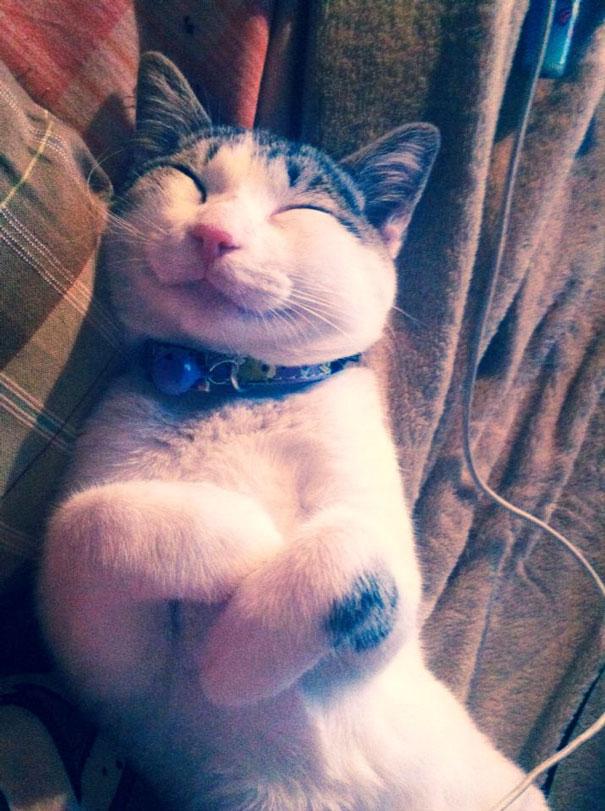 smiling-cat-27__605