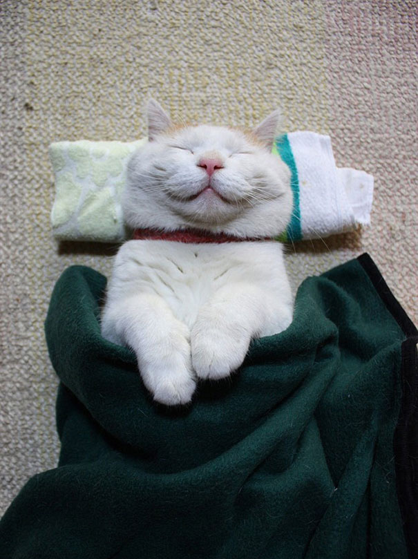 smiling-cat-31__605