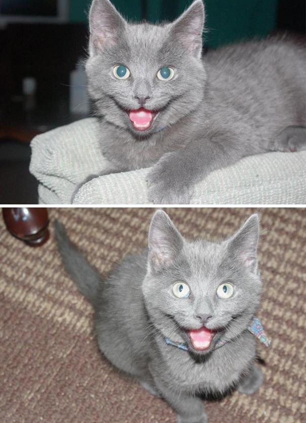 smiling-cat-3__605