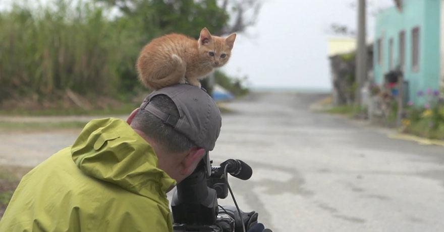 stray-kitten-photographer-Mitsuaki-Iwago-5