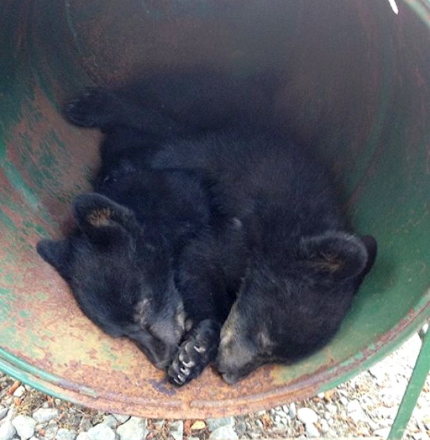 two-cubs