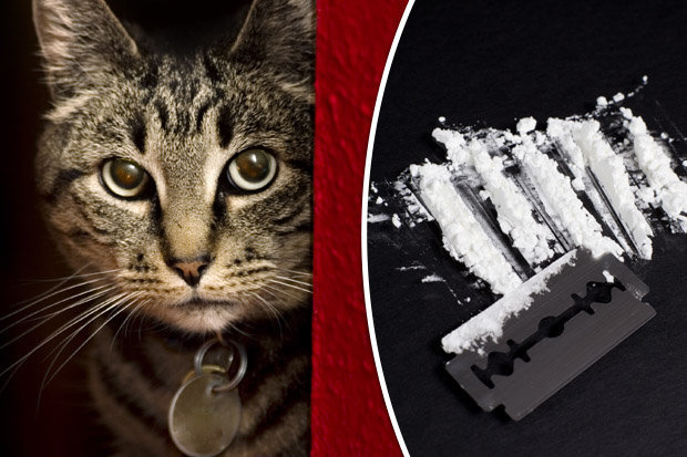 SICK-The-cat-was-forced-to-snort-a-line-of-coke-458629