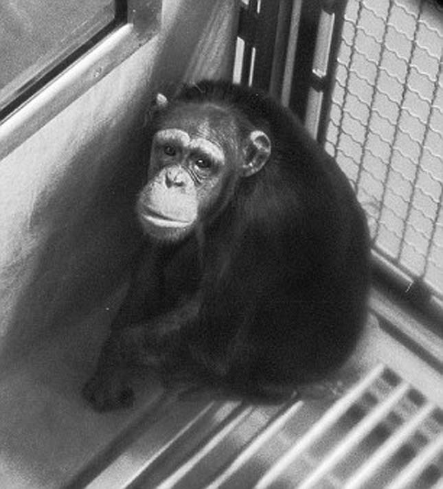 The Immuno cages that were home to the chimps for many years before they were freed.
