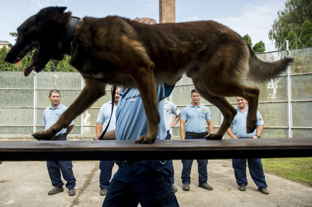 kutyabü8
