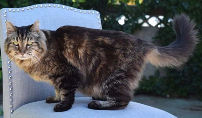 Guinness World Records named Corduroy, a 26-year-old cat from Sisters, Oregon, as the world's new oldest living cat on Thursday, August 12, 2015. Corduroy celebrated his 26th birthday on August 1. Corduroy has lived with Ashley Reed Okura of Sisters, Oregon, since he was a kitten and Okura was 7 years old.
