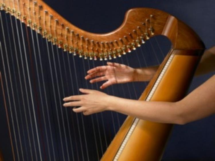 200553177-001-harp