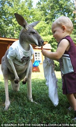 2C0A3A5800000578-3224990-Alia_feeds_the_kangaroo-a-17_1441642060451